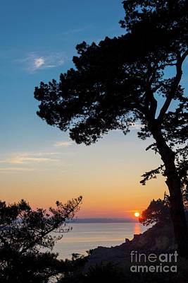 Art Print featuring the photograph Pine Tree by Delphimages Photo Creations