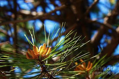 Wall Art - Photograph - Pine Tree by Elaine J Hoffman