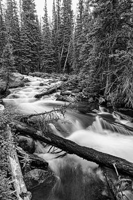 Photograph - Pine Tree Forest Creek Portrait In Black And White by James BO  Insogna