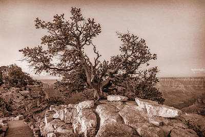 Photograph - Pine Tree Grand Canyon Monotone 7r2_dsc1823_08142017 by Greg Kluempers