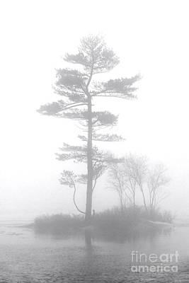 Photograph - Pine Tree In Heavy Fog by Olivier Le Queinec