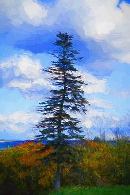 Plein Air Mixed Media - Pine Tree by Lilia D