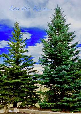 Photograph - Pine Tree by Lorna Maza