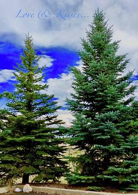 Photograph - Pine Tree by Lorna Maza