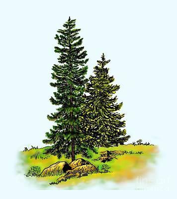 Pine Tree Nature Watercolor Ink Image 2b        Art Print