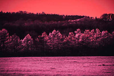 Photograph - Pine Tree Pink by Emily Stauring