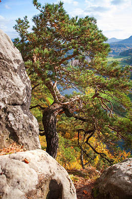 Photograph - Pine Tree. Saxon Switzerland by Jenny Rainbow