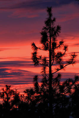 Photograph - Pine Tree Sunrise by James Eddy