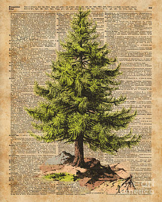 Pine Tree,cedar Tree,forest,nature Dictionary Art,christmas Tree Art Print