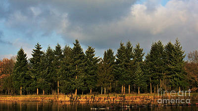 Photograph - Pine Trees Across The Water by Gerhard Hoogterp
