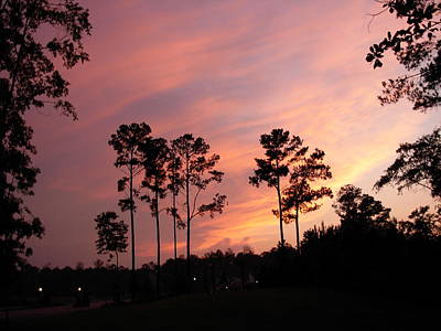 Photograph - Pine Trees And Sunset by Jeanne Kay Juhos