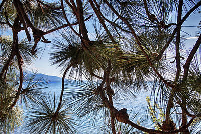 Photograph - Pine Trees At Flathead Lake, Montana #2 by Tatiana Travelways