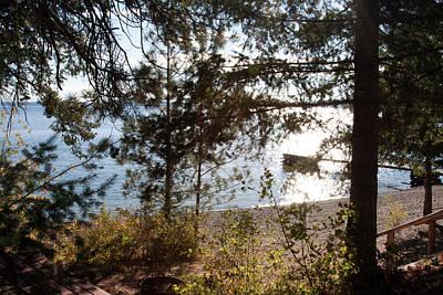 Photograph - Pine Trees At Flathead Lake Montana by Tatiana Travelways