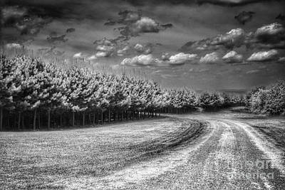 Stellar Interstellar Royalty Free Images - Pine Trees In The Ozarks B Royalty-Free Image by John Myers