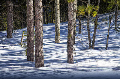 Photograph - Pine Trees In The Winter Snow by Randall Nyhof