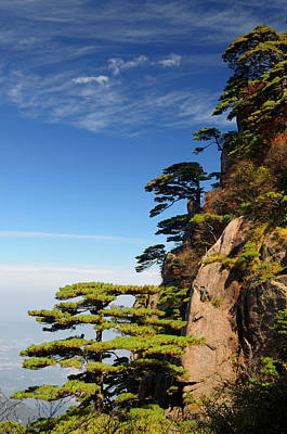 Fall Photograph - Pine Trees Overlooking Valley At Beginning To Believe Peak Yello by Reimar Gaertner