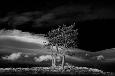 Photograph - Pine Trees With Wind Swept Clouds by Randall Nyhof