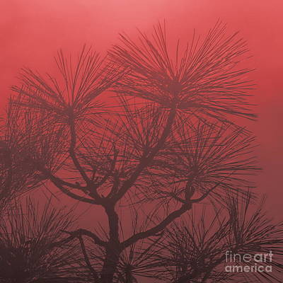 Photograph - Pine Treetop R by Tim Richards