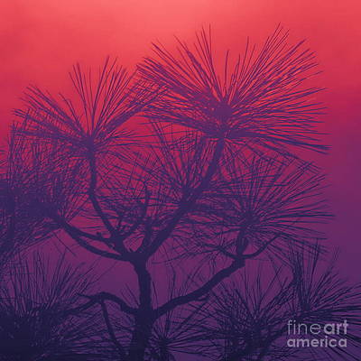 Photograph - Pine Treetop Rb by Tim Richards