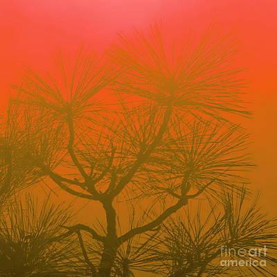 Photograph - Pine Treetop Rg by Tim Richards
