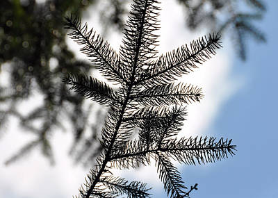 Pine View Art Print by JAMART Photography