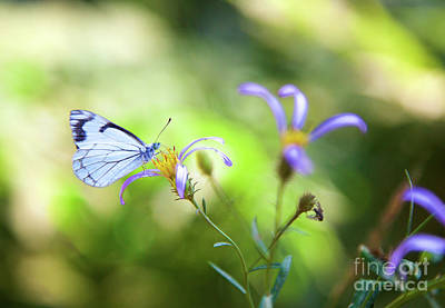 Photograph - Pine White Butterfly Of Purple And Gold Flower by Bruce Block