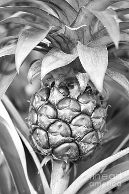 Photograph - Pineapple In Black And White by Carol Groenen