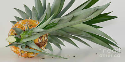 Photograph - Pineapple Panorama by Olga Hamilton