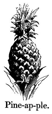 Pineapple Drawing - Pineapple Print by English School