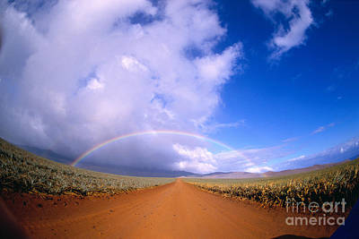 Photograph - Pineapple Rainbow by Allan Seiden - Printscapes