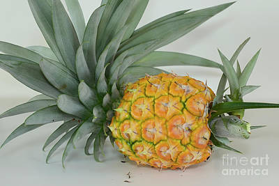 Photograph - Pineapple Still Life by Olga Hamilton