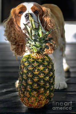 Photograph - Pineapple Welcome Home by Dale Powell