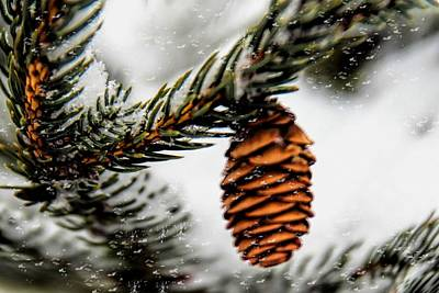 Photograph - Pinecone In A Snowstorm by Pat Cook