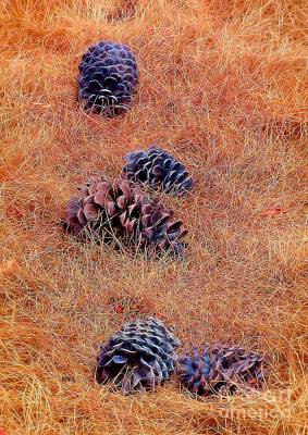 Photograph - Pinecone Pile by Patrick Witz