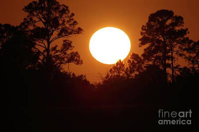 Photograph - Pinehenge by Rick Mann