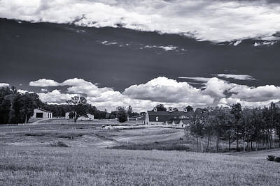 Photograph - Pineland 5505 by Guy Whiteley
