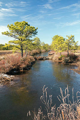 Pinelands Water Way Art Print