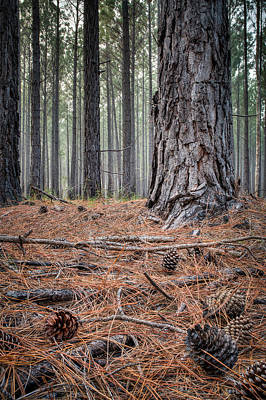 Photograph - Pines And Needles 2 by Brad Grove