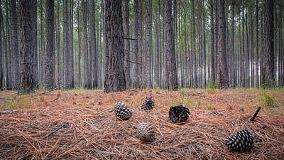 Photograph - Pines And Needles 4 by Brad Grove