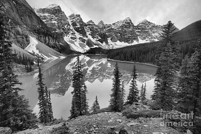 Photograph - Pines At Moraine Black And White by Adam Jewell