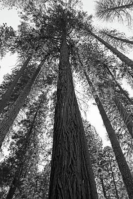 Yosemite Np Photograph - Pines Black And White by Sierra Vance