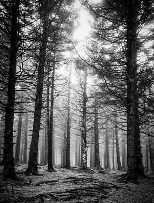 Photograph - Pines-bw by Joye Ardyn Durham