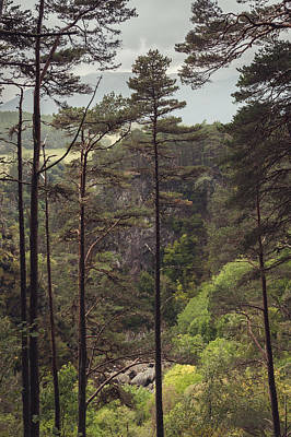 Loch Ness Photograph - Pines In Foyers by Chris Dale