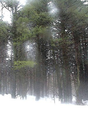 Painting - Pines In Snow by Paul Sachtleben