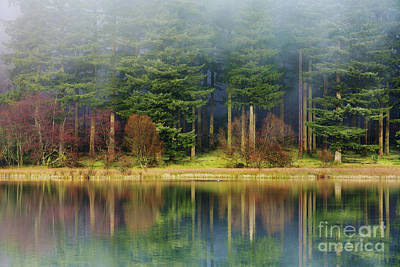 Pines In The Mist Art Print by Tony Higginson