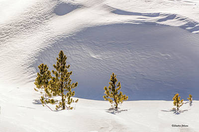 Photograph - Pines In The Snow Drifts by Stephen Johnson