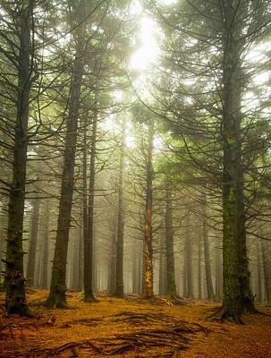 Photograph - Pines by Joye Ardyn Durham