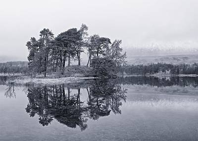 Photograph - Pines On Loch Tulla by Stephen Taylor