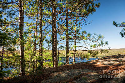 Algonquin Photograph - Pines On Sunny Cliff by Elena Elisseeva