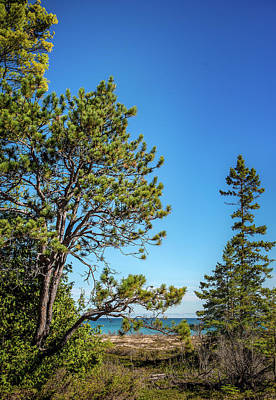 Photograph - Pines On The Beach by Onyonet  Photo Studios